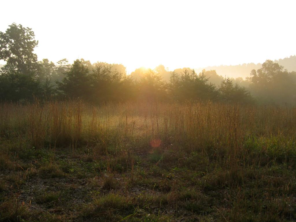 bp.grass.morn.0952 Glow